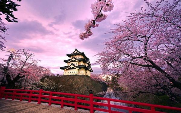 イマクリ春の桜祭りキャンペーン!!